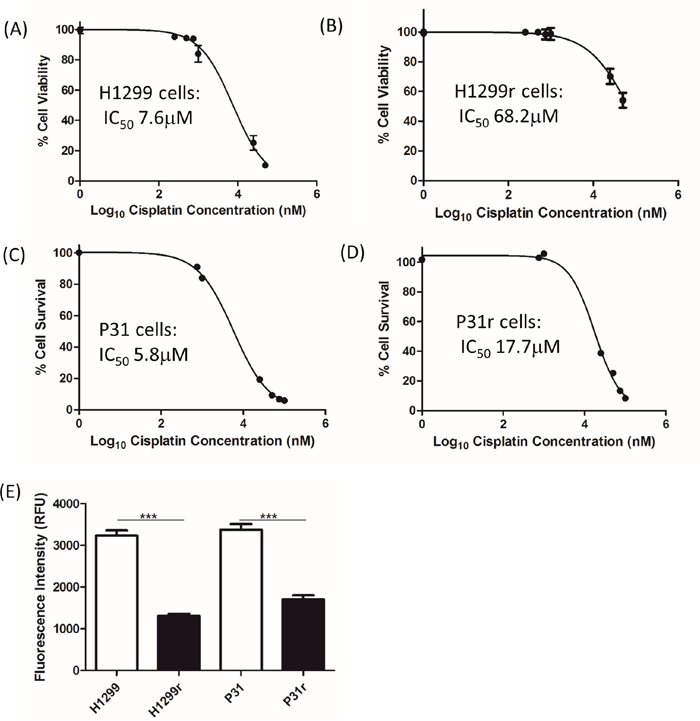 The effect of cisplatin on the viability of H1299, H1299r, P31 and P31r cells as determined by the Alamar Blue viability assay.