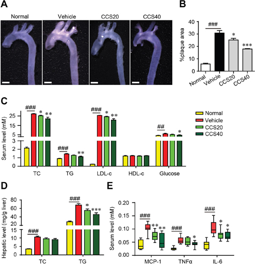 Cordycepin (Cpn) inhibits atherosclerotic lesion formation.
