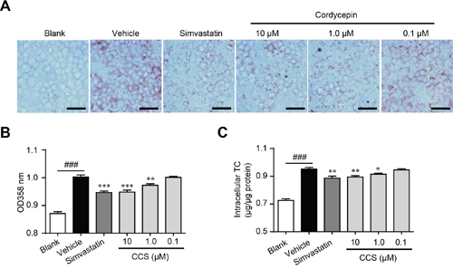 Cordycepin (Cpn) inhibited oxidized low-density lipoprotein (oxLDL)-elicited foam cell formation in RAW264.