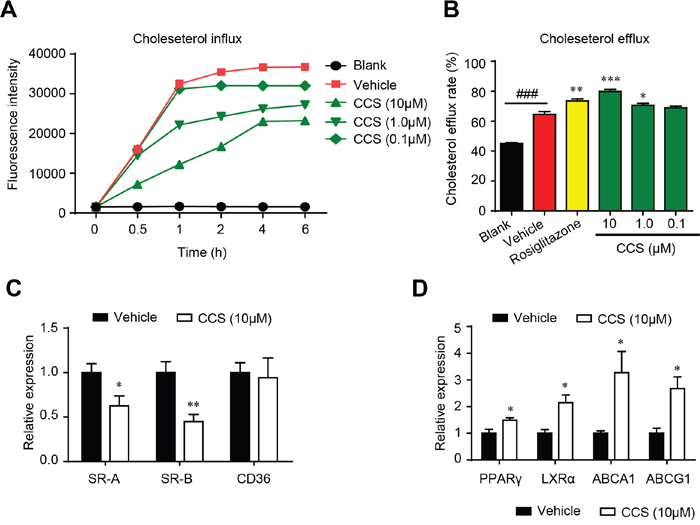 Cordycepin (Cpn) regulated intracellular cholesterol homeostasis by inhibiting cholesterol uptake (A), promoting cholesterol efflux (B) and modulating mRNA levels of genes that involved in cholesterol uptake (C) and efflux (D) in RAW264.