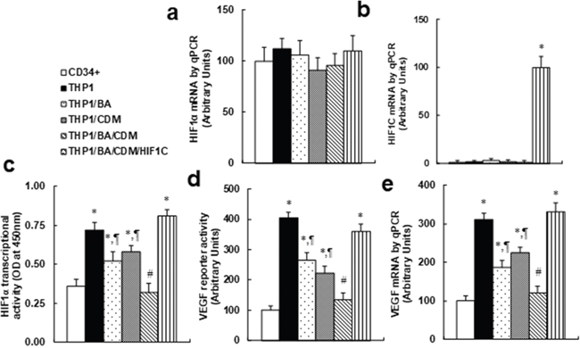 Combination of betulinic acid (BA) and chidamide (CDM) additively suppresses the HIF1α pathway, and overexpression of constitutive HIF1α (HIF1C) diminishes this effect.