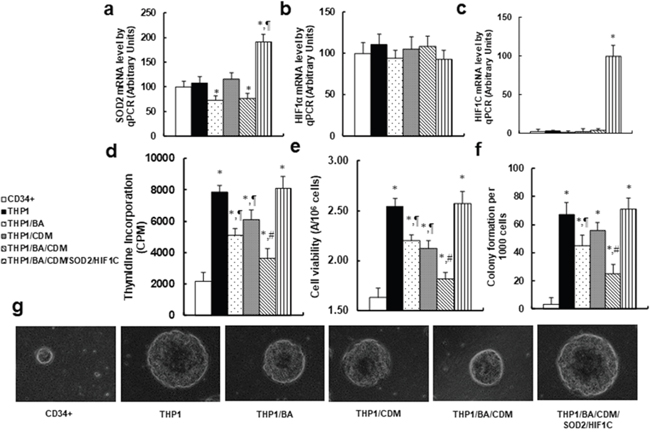 Combination of betulinic acid (BA) and chidamide (CDM) additively suppresses tumor cell growth; overexpression of SOD2 and constitutive HIF1α (HIF1C) diminishes this effect.