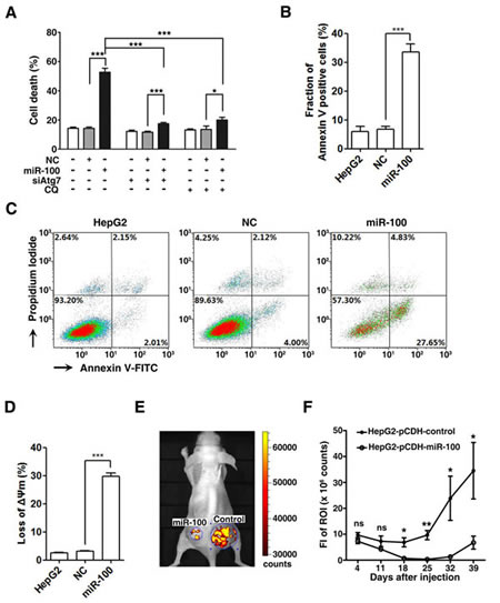 Restoration of miR-100 expression promotes apoptotic cell death