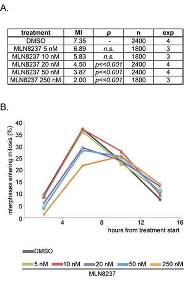 MLN8237 delays entry into mitosis.