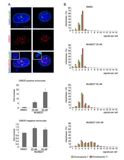 Ploidy alteration in MLN8237-treated cells.