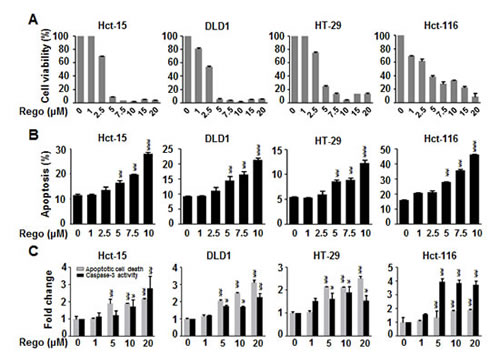 Regorafenib dramatically decreased cell viability and significantly induced apoptosis in colon cancer cell lines.