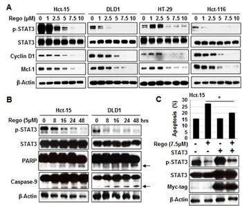 Sensitizing effects of regorafenib were associated with p-STAT3 (Tyr 705) downregulation.