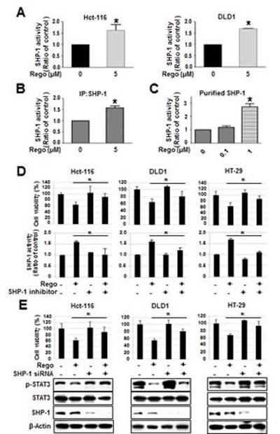 Regorafenib-enhanced SHP-1 tyrosine phosphatase activity was crucial for growth inhibition induced by regorafenib.