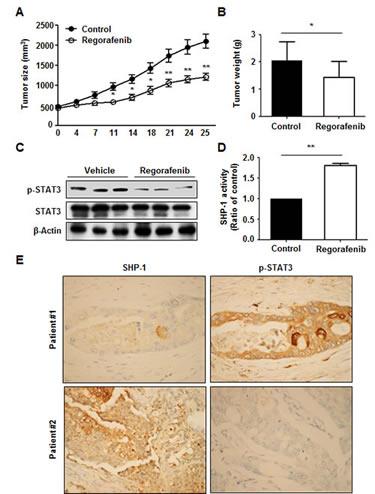 Regorafenib had a suppressive effect on tumor formation
