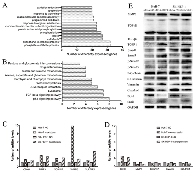 Analysis and validation of the mRNA microarray.