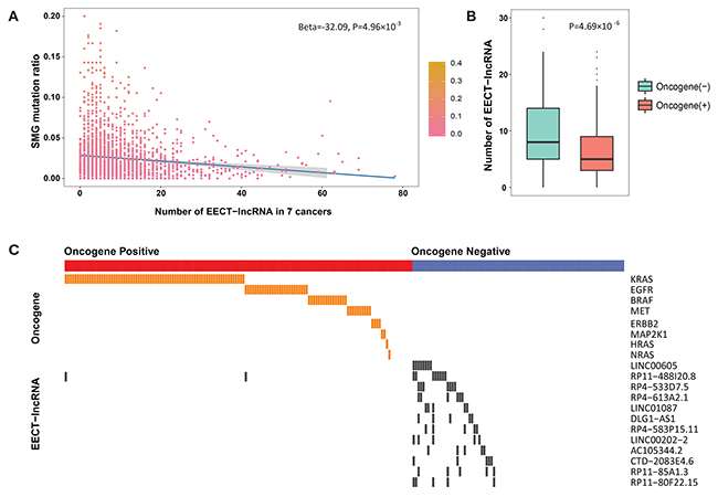 The association between SMG mutation ratio and the number of activated EECT-lncRNAs.