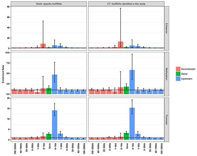 Enrichment analysis of testis-specific regulatory elements.
