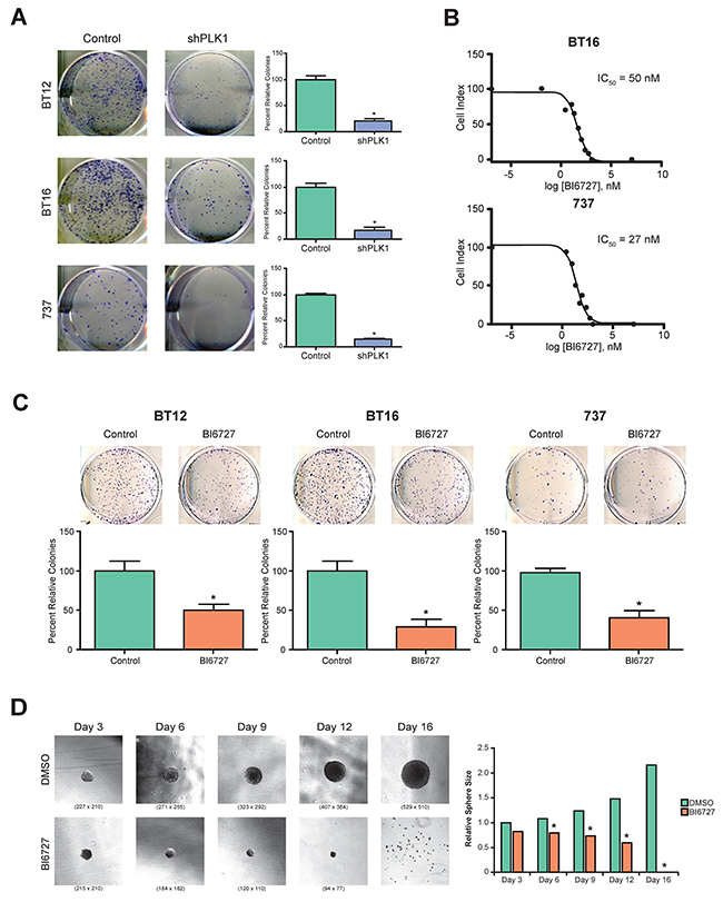 Genetic and pharmacological inhibition of PLK1 in ATRT cell lines: tumor cell growth and tumor-sphere formation was inhibited.