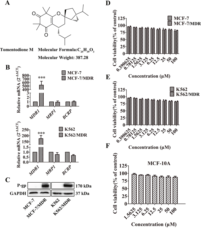 Effect of TTM on cancer cell toxicity and expression of ABC transporters.