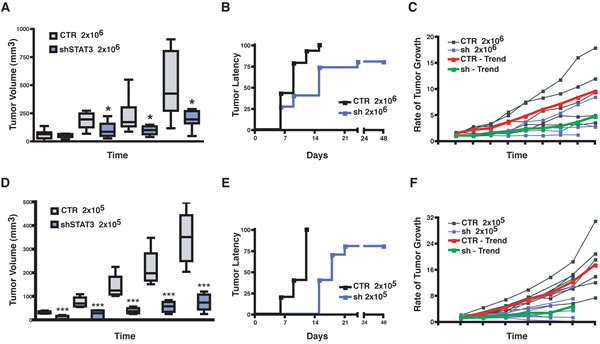 Silencing of STAT3 increases latency and decreases growth of primary breast tumors.