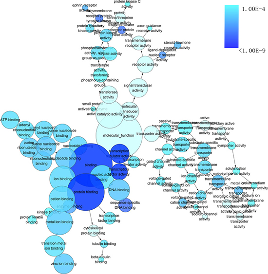 The network of enriched gene ontology (GO) terms of biological process.