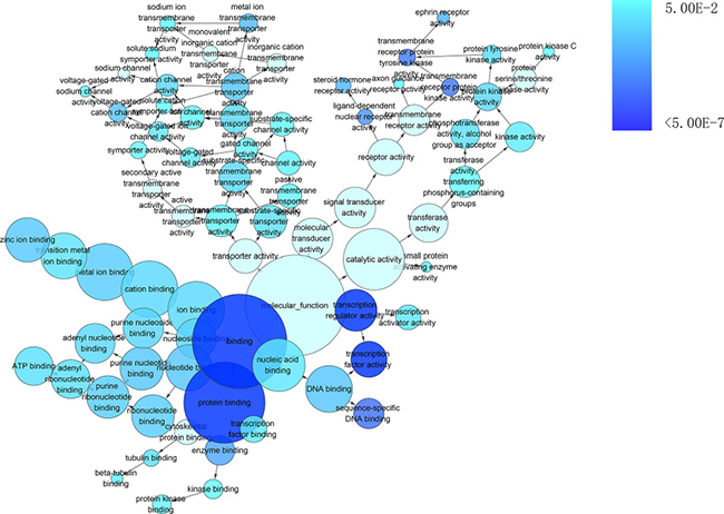 The network of enriched gene ontology terms of molecular function.