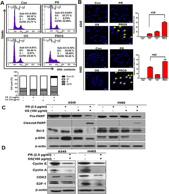 PROS induced apoptosis and S phase arrest in A549 or/and H460 NSCLCs.