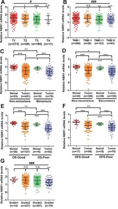 Low level of NBR1 mRNA predicts poor prognosis of ccRCC patients.