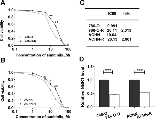 The sunitinib sensitivity curve and NBR1 expression level of sunitinib-resistant and parental cells and correlated with the VEGF signaling pathway.