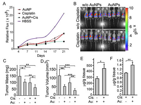 AuNPs combined with cisplatin treatment reduces tumor growth in a mouse model of ovarian cancer.
