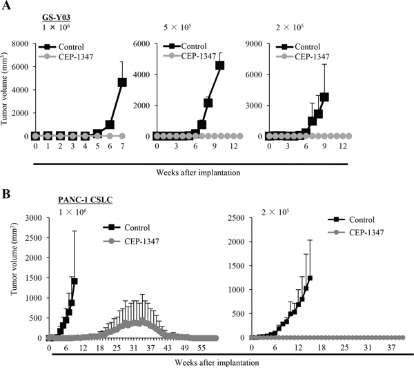 CEP-1347 inhibits the tumor-initiating capacity of cancer stem cells.