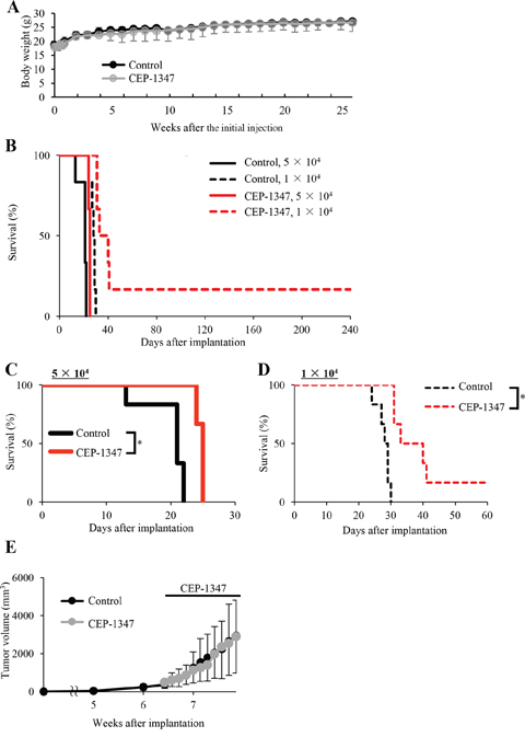 Systemically administered CEP-1347 selectively targets and inhibits tumor-initiating cancer stem cells within tumors in tumor-bearing mice.