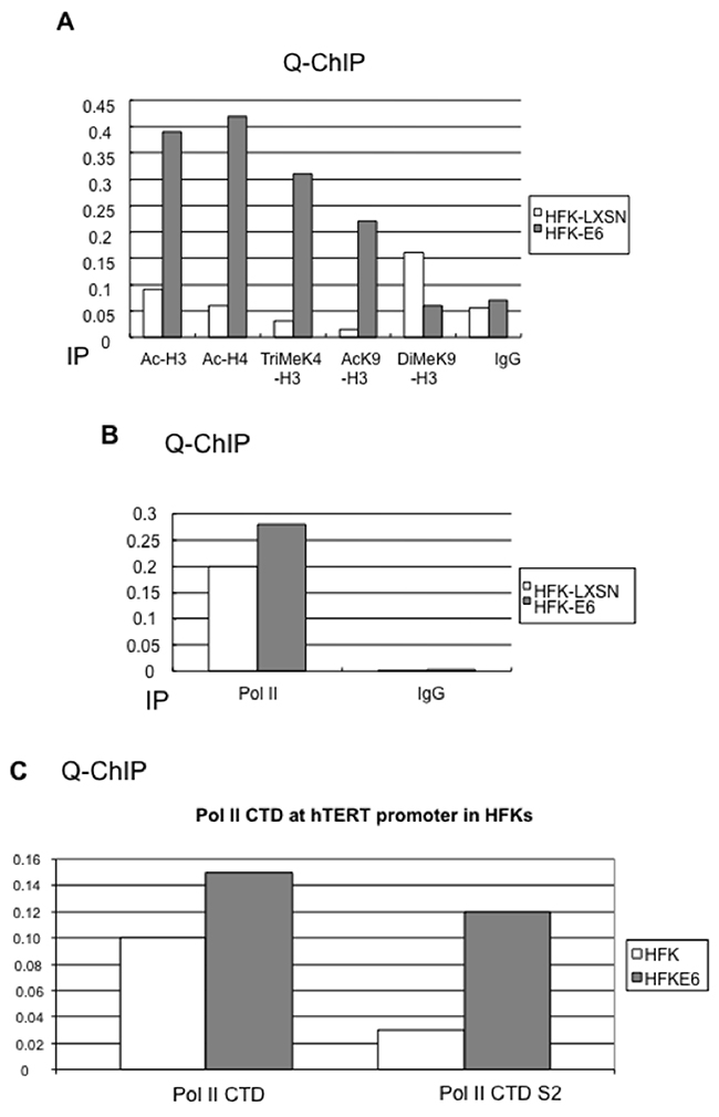 HPV16 E6 induces chromatin changes and phosphorylation of the RNA Polymerase II (Pol II) CTD at the hTERT promoter.