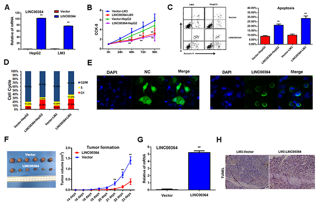 LncRNA00364 inhibits proliferation and promotes apoptosis of HCC cells in vitro and in vivo.