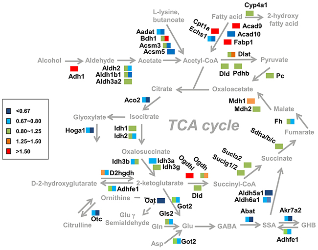 Summary of the changes in metabolic pathways observed in response to alcohol dependence.
