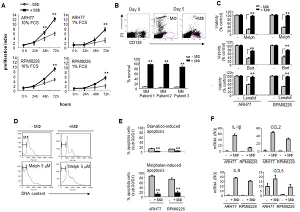 Macrophages support MM cell survival and proliferation, protect MM cells from chemotherapy-induced apoptosis and elevate expression of pro-angiogenic factors in MM cells.