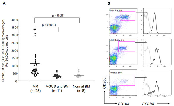 Elevated numbers of CXCR4-expressing M2 macrophages in BM samples of MM patients.