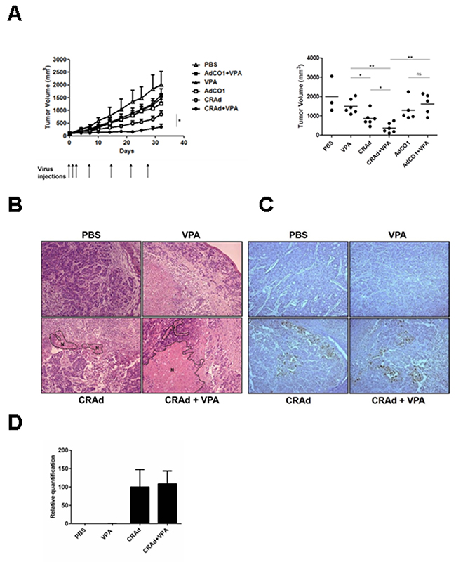 Reduction of tumor growth following the treatment of colon carcinoma tumors with CRAd and VPA.