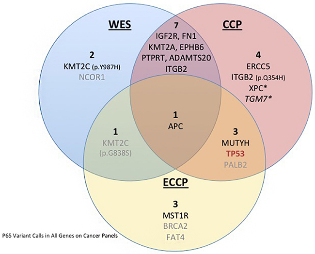 Venn diagram depicting the variants identified in P65 in WES and the targeted CCP and ECCP.