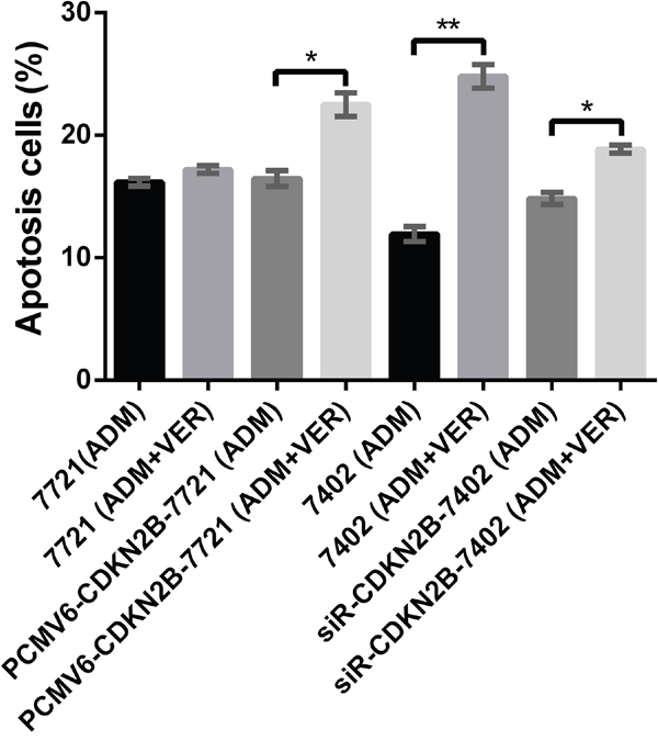 Promotion test of VER+ADM in cell apoptosis by flow cytometry.