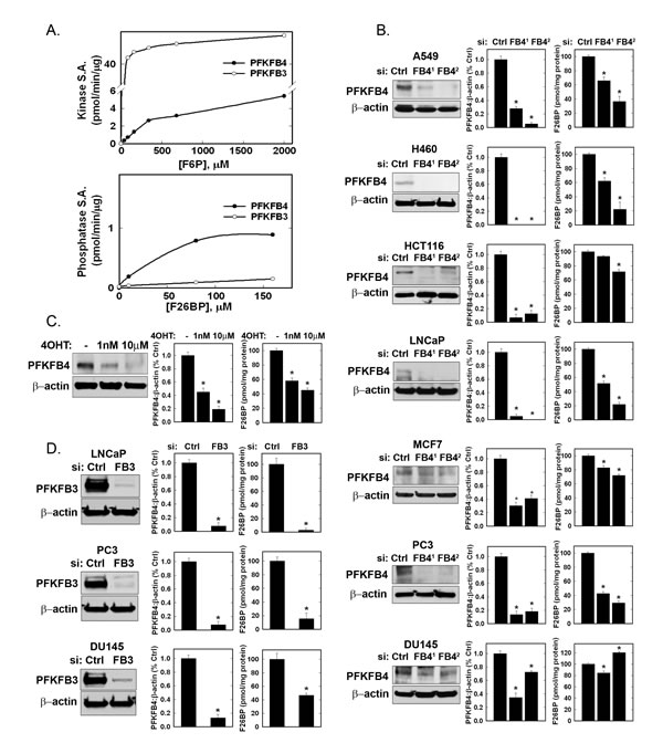Recombinant PFKFB3 and PFKFB4 Kinase and Phosphatase Activities and Effects of PFKFB3 and PFKFB4 Inhibition on Intracellular F2,6BP in Cancer Cells.