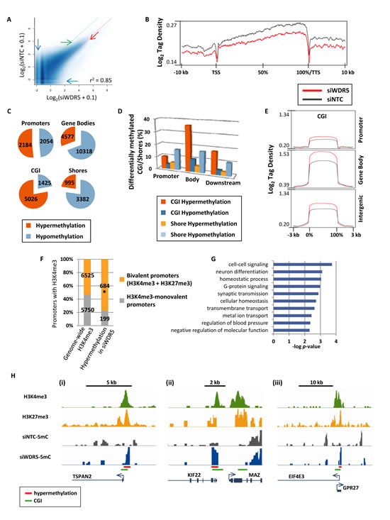 Disruption of MLL/COMPASS complex and H3K4 methylation induces DNA hypermethylation at CGI and bivalent promoters.