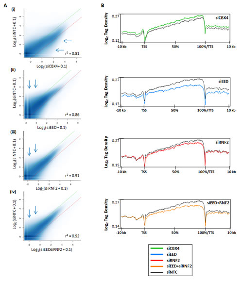 Differential DNA methylation in polycomb complex function-depleted cells.