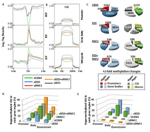 Impact of PRC1 and PRC2 depletion on DNA methylation patterns.