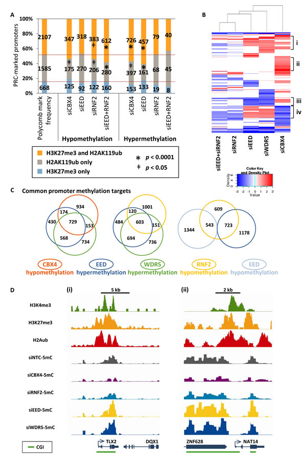 Selective epigenetic co-regulation of DNA methylation at target genes by PcG complexes.