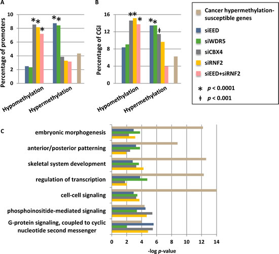 Promoters that are hypermethylated by depletion of WDR5 or EED are commonly hypermethylation in cancer.
