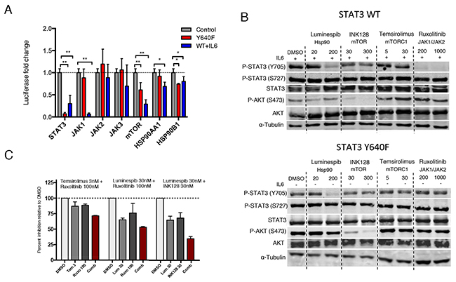 Hsp90 inhibition abrogates both mutant and WT STAT3 activity and phosphorylation.