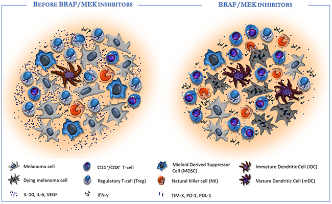 Targeted therapy affects the tumor microenvironment in favour of immune re-activation.