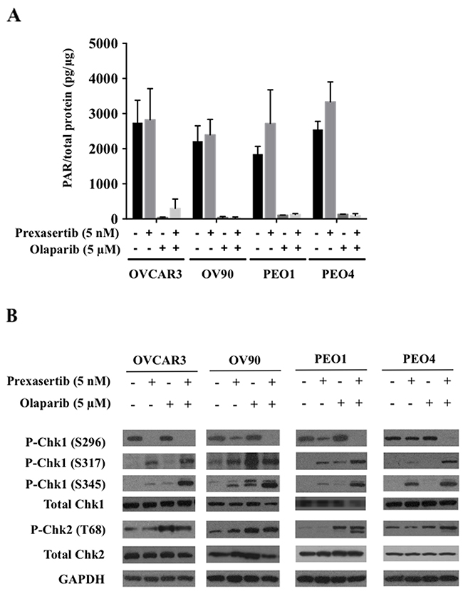 Prexasertib and olaparib display on-target effects at lower than clinically achievable doses.