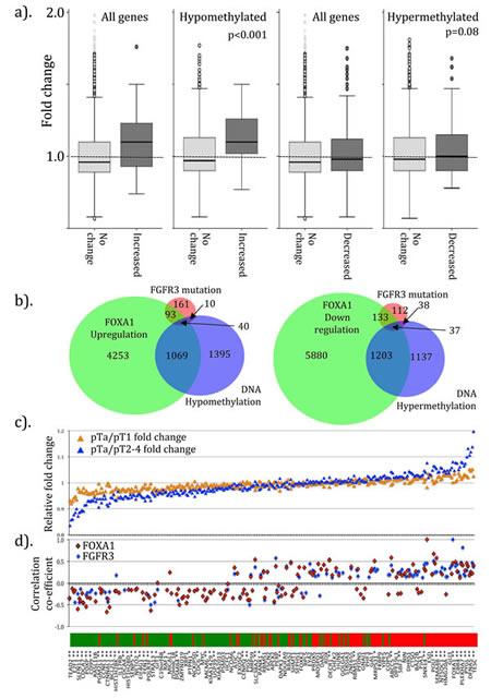 Symmetry of genotype between FOXA1 transfected cells, FGFR3 mutant tumors and in sporadic UCC.