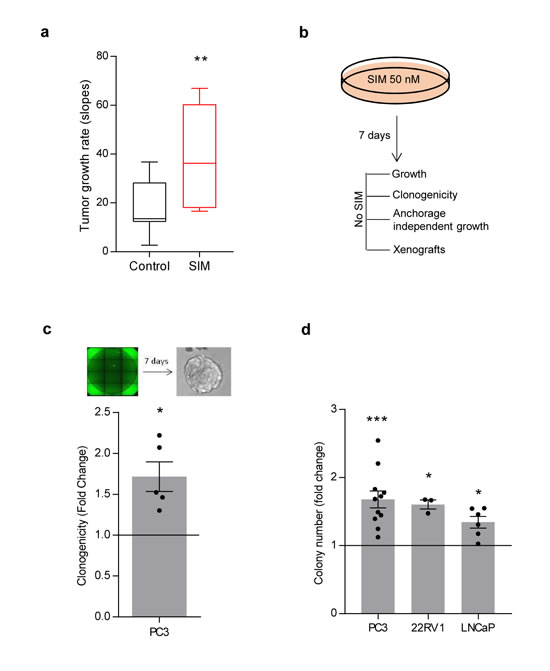 Low-dose simvastatin enhances features of prostate cancer aggressiveness in vitro and in vivo.