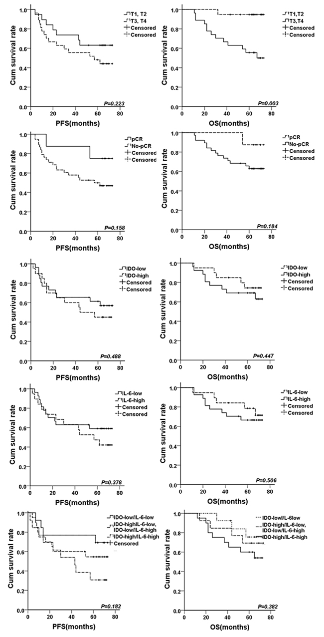 The survival curves for breast cancer patients treated by neoadjuvant chemotherapy.