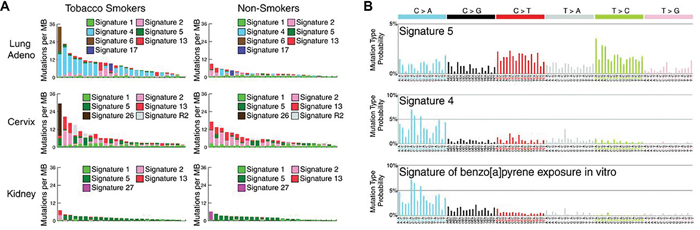 The mutational signatures in smokers vs nonsmokers.