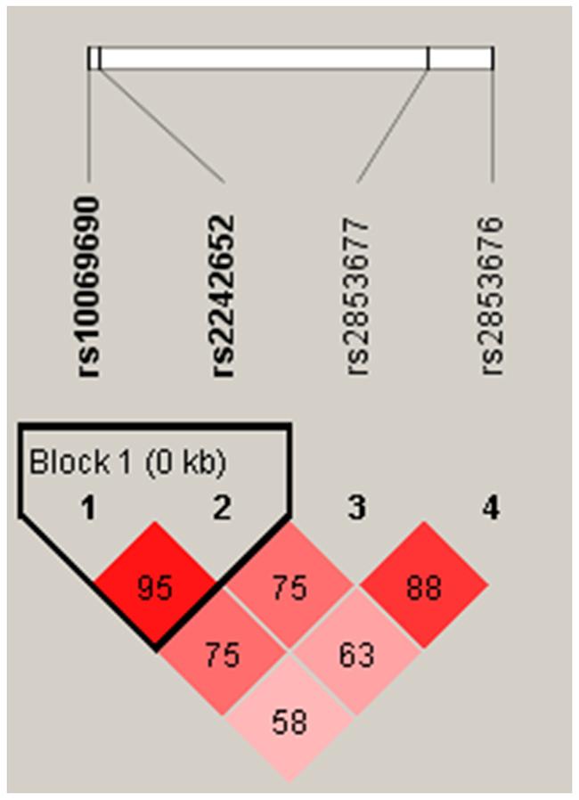 Haplotype block map for SNPs of the TERT gene.