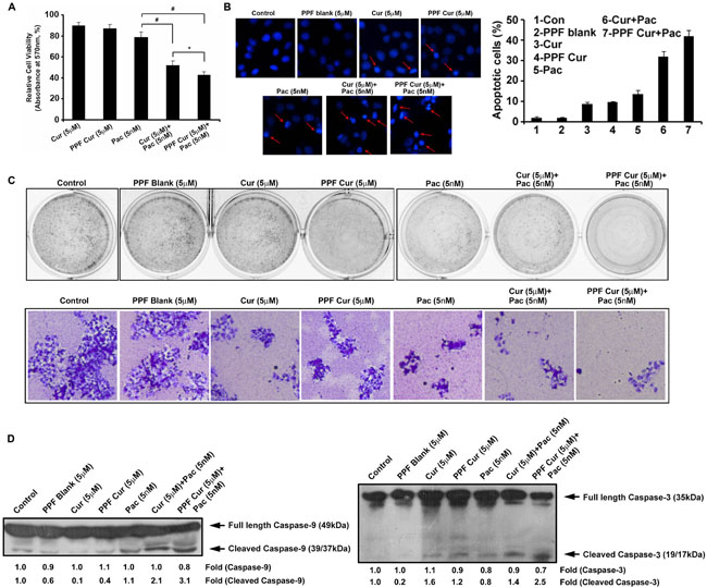 PPF-curcumin induces significant chemosensitization towards paclitaxel.